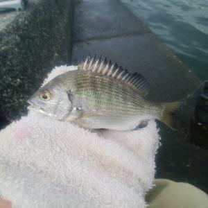 清水 清開 紀州釣り 餌取り活性ありすぎじゃね