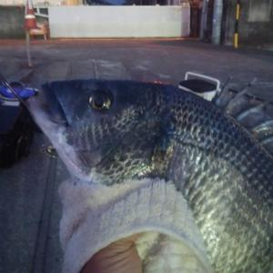 清水 三保 紀州釣り 食ってくるスイッチはどこ?