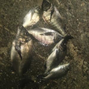 清水 三保 紀州釣り 久しぶりの経験