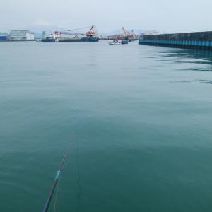 清水 紀州釣り この時期の調査?