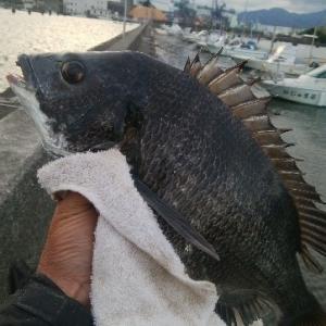 清水 清開 紀州釣り 先週と変わらず この状態が続くか?