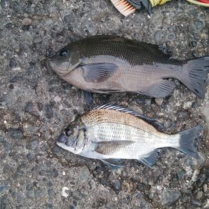 清水 三保 紀州釣り こんな状況あるんか?