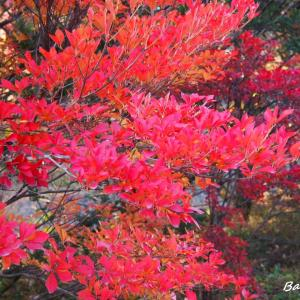 季節の色を探す。。。