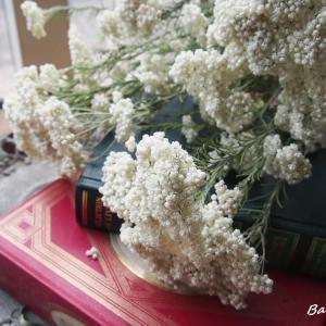 今年も綺麗ですライスフラワー・パールホワイト。。。
