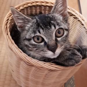 子猫募集開始のお知らせ☆