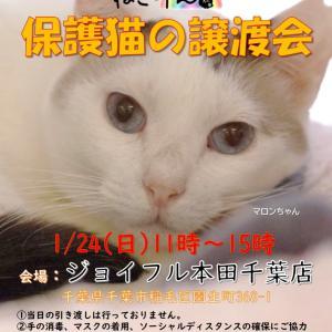 出張譲渡会 ジョイフル本田千葉店 のお知らせと お届けラッシュ!!