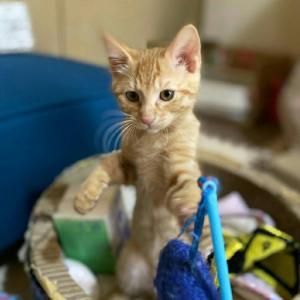 1/24出張譲渡会参加猫を紹介します! 子猫編