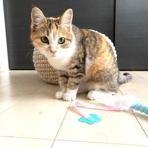 新入り❗️三毛猫親子