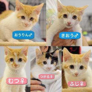 6月27日譲渡会 初参加子猫軍団~その①~