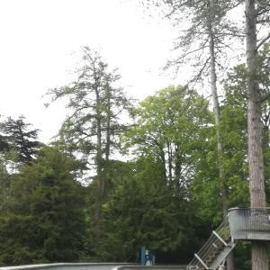 ウェストンバート森林公園(Westonbirt Arboretum)@観光情報