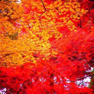 有馬温泉『太閤の湯』へ。紅葉も見事です(^_^)/