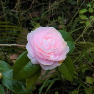 桜井の聖林寺で塗香づくり。 フェノロサ、白洲雅子も魅了された十一面観音を観ました (^_^)/