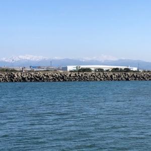 金沢港でサワラ釣り