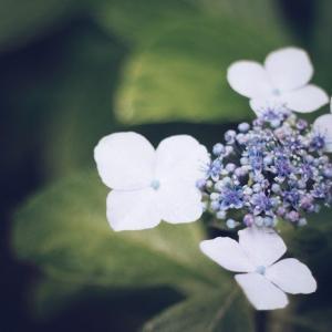 『Enjoy!marche』3/5(木)は春を呼ぶ『啓蟄』