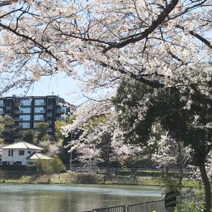 桜吹雪の風の日に、しれっと改名(笑)