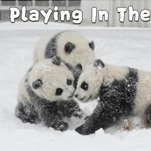 雪の中で遊ぶパンダこ子供が癒やされる!!