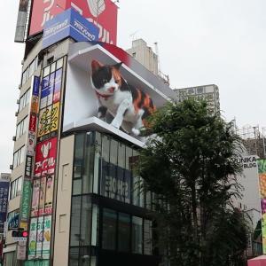 超巨大なネコが、突然 新宿のビルの上に出現する!!