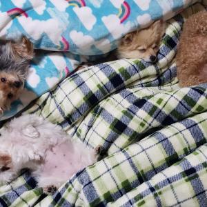 おやすみなさい。追伸です。