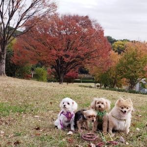 妻と4姉妹と紅葉を求めて。 11月22日