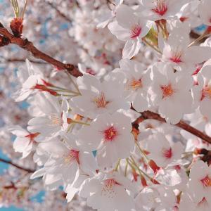 【海外旅行レポート】ニューかめりあで春の釜山旅行へ