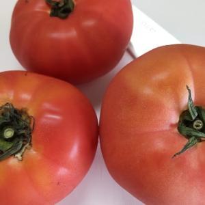 無水トマトシチューを作る
