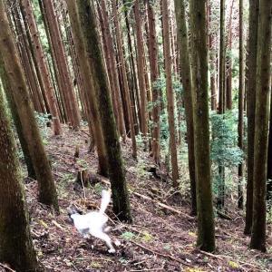 ゴムピンスパイク若葉【インプレッション】