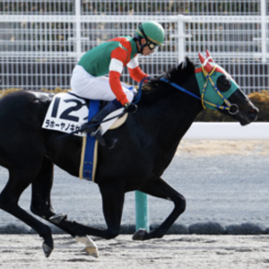 〈8月3日競馬予想〉小倉11R九州スポーツ杯2019を勝利するのは、この馬だ!!