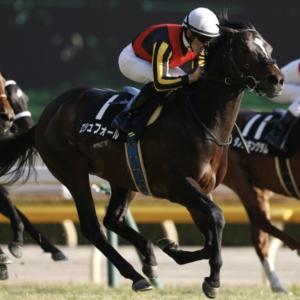 〈8月11日競馬予想〉乗れている田辺騎手に期待。ロシュフォール復活祭!!