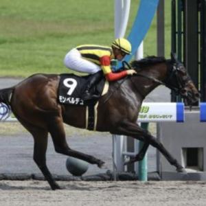 〈8月17日競馬予想〉今日の勝負レースは、テレQ杯2019。モンペルデュと川田騎手に全部!!