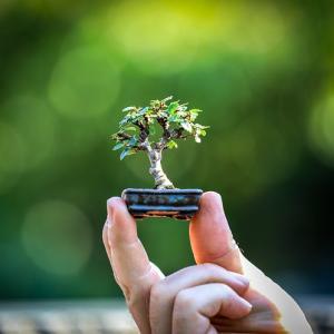 【4月25日限定ヒーリング】締め切り間近!「樹木の生命Ver.2」