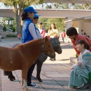そろそろ武豊は買い...それは京都牝馬Sかもしれない。