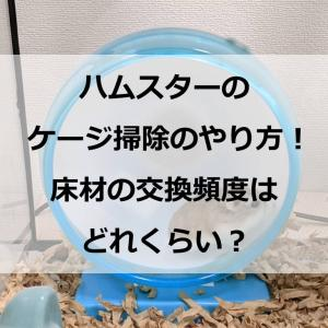 ハムスターのケージ掃除のやり方!床材の交換頻度はどれくらい?