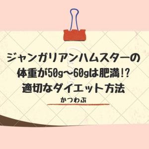 ジャンガリアンハムスターの体重が50g~60gは肥満!?適切なダイエット方法!