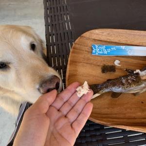 川遊びに魚釣りにBBQ 動画あり