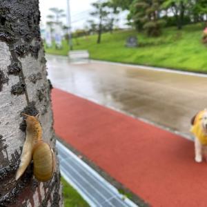 梅雨ですね~☂