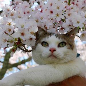 春の「もふ」さん その2