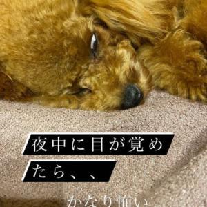 宇野樹君インスタストーリーより 夜中に目が覚めたら、、 かなり怖い