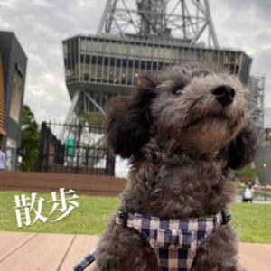 9月16日にアップされていた宇野樹君のインスタストーリーより 散歩