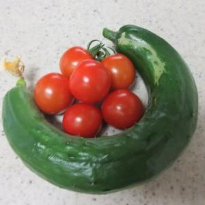 胡瓜順調、隣のトマトはあーまいぞ~  ★   考えても仕方ないけど考える  ★   お昼と晩御飯
