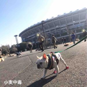 お散歩トレーニング初め@横浜(2020.1.13)