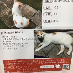 四街道市(千葉市小深町山王町)付近で迷子の猫ちゃん