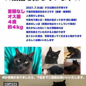 千葉市若葉区西都賀で迷子の黒猫さんを探しています