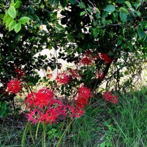 Autumnal Equinox Day