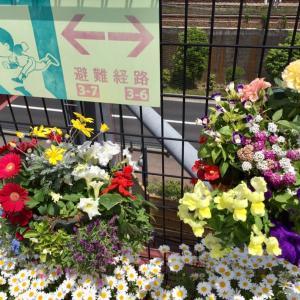 花咲くズムスタに来ましたよ。5/4みどりの日〜試合前