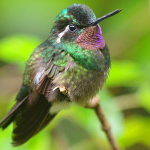 モンテベルデ Hummingbird Gallery