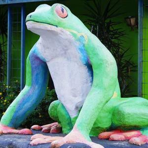 カエル園 Frog Pond Ranario