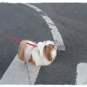 今朝の散歩は…♪