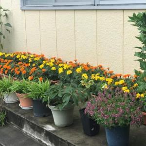 花いっぱい運動と宝物