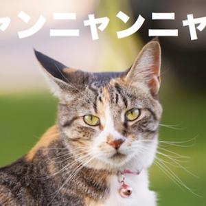 2月22日は猫の日。ニャンニャンニャンですから〜^^