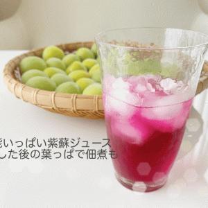 紫蘇ジュースで爽やかにすごそう。煮出した後の葉っぱは佃煮に。my暮らしの歳時記13